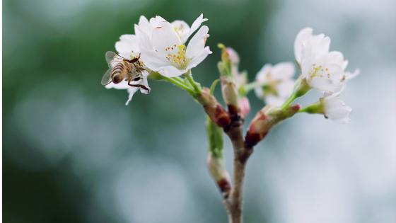 Primavera | Días clave para comunicar en gastronomía, desde otra perspectiva