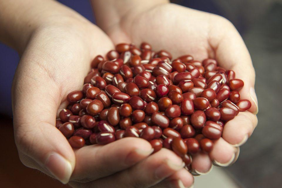 Imagen de manos con un puñado de judias para iustrar el post de gastrodías para primavera en simple culinaria, perspectivas gastronómicas