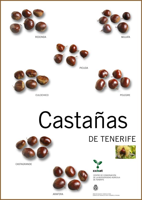 poster sobre las diferentes variedades de castañas de Tenerife del CCBAT