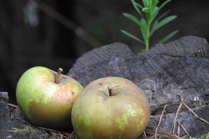 Un brindis especial por la sidra de Canarias y sus manzanas